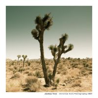 Joshua Tree by myINQI