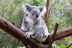 STOCK - Australia Zoo 2013-289 by fillyrox