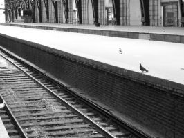 Pigeons waiting by train by SolitudeMissing