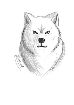 Wolf digital drawing by Darkwolfsilvia
