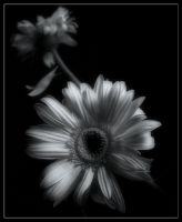Beauty in black and white by insaneone