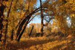Trees in autumn by Tumana-stock