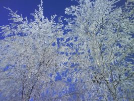 Ice birches by Renz-chan