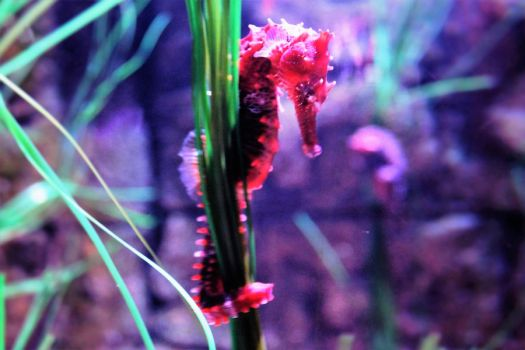 Little Seahorse by AngelReaper29