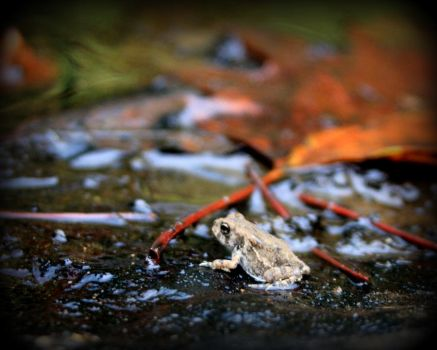 Little Frog by shadowcolors15