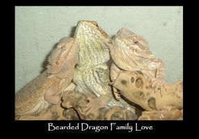 The Bearded Dragon Family Love by peonyfantasy