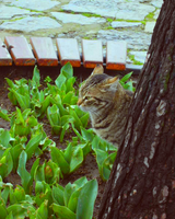 Turkish cat [1] by heytherejules