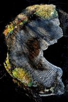 Stump+Frost by Coigach