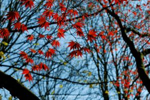 :red leaves: by angies-soulshow