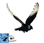 Cut-out stock PNG 111 - flying magpie by Momotte2stocks
