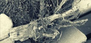 My Nature _ Old Tree by MSaadat10