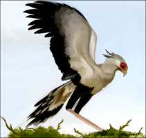 Secretary bird. by Volcano-Queen