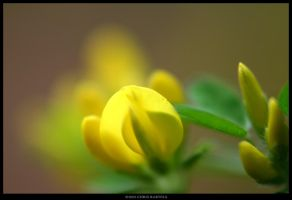 Small and Yellow by Zaleucus