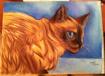 Siamese Cat by FrozenFlights