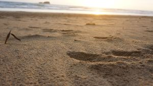 Detailed sand at Sunrise by manuelo-pro