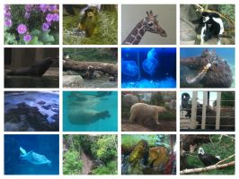 Zoo/Aquarium Collage by DreamcatherDrop