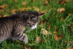 Whats that? by Shearkin