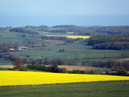 yellow in the landscape by segroeg
