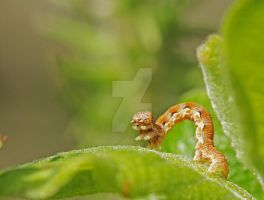Caterpillar does the wave... by clochartist-photo