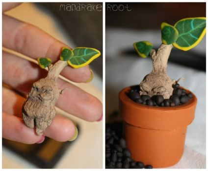 Mandrake Root by SecretAgtPanda