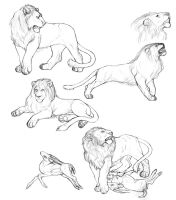 Lion sketches by caffeinetooth