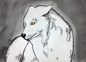 White wolf by nikoskap