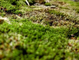 Moss Macro by cestnms