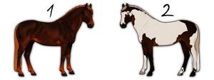 Horse adoptables CLOSED by i3nici