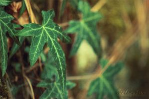 Star-shaped leaf by BambisLogic