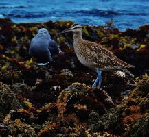 Kelp Birds by NottheVoreFreak