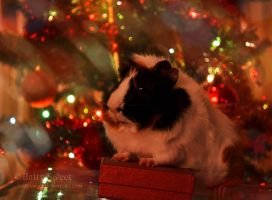 Christmas Guinea Pig by BattySweet