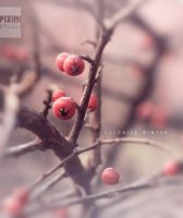 Colorize winter by piximi