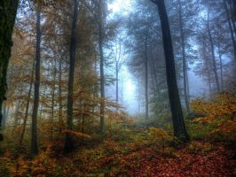 Deep in the Forest No2 HDR by Risen-From-The-Ruins