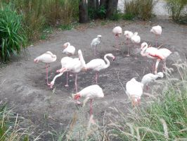 Flamingos and other by ToaDJacara