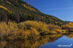 Willow Glass Reflection by mjohanson