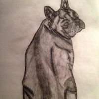 french bull dog drawing by EJJetsetter