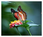 Flower or butterfly? by ameliasantos