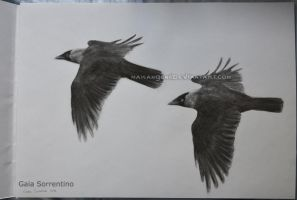 Flying Jackdaws by makangeni