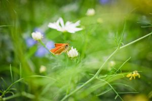 The Butterfly Collector II by flyktplan