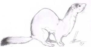 Weasel by Baid