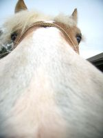 Horse nose by EmiiLly
