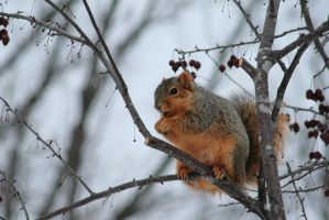 Nuts for Crabapples by Anachronist84
