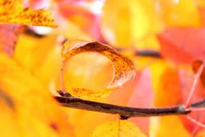 Fall Into a Hole by DanielHauck