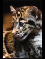 Little Panther by sekhmet-neseret