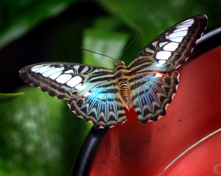 Butterfly House #2 by notoriousgem42