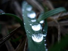 water marbles by Lady-Deliah