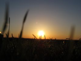 Grass with Sunset 2 by Daisydog8