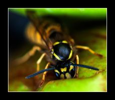 Hello Wasp by LordLJCornellPhotos