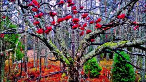 A Real Symphony Of Colours In November    by eskile