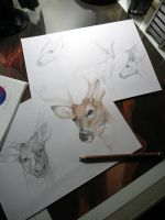 Studies and Sketches 1 by SulaMoon